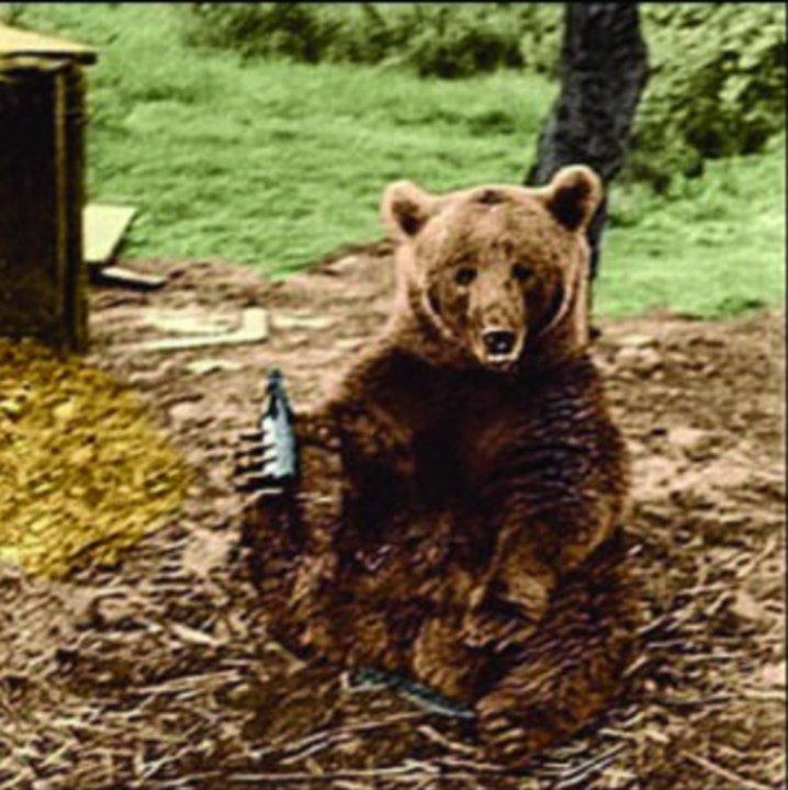 Papa Bear Drinking.jpg