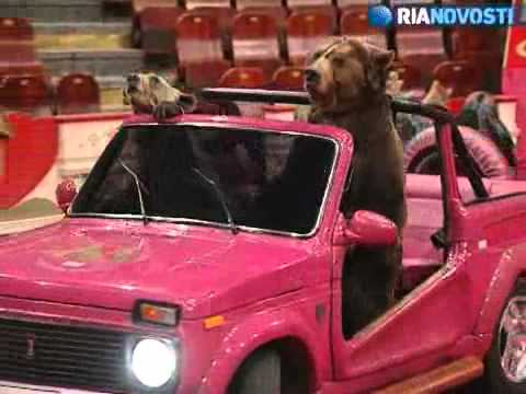 Papa Bear in a jeep.jpg